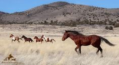 The Fiscal Year 2018 spending proposal released on Wednesday by the House of Representatives and Senate includes good news for America's horses, both wild and domestic. The $1.3 trillion spe…