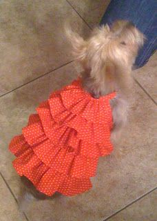 Bella Frill Dress (For Small Dogs) - free download