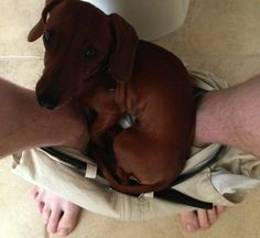 Pets Who Won't Let You Poop In Peace