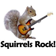 squirrels with guitars rock meme Secret Squirrel, Squirrel Girl, Flying Squirrel, Cute Squirrel, Squirrel Humor, Squirrel Pictures, Funny Animal Pictures, Animals And Pets, Funny Animals