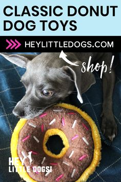 Dogs love this classic donut toy by Zippy Paws! They squeak for extra fun and are also great for playing fetch with your dog! Available in strawberry, blueberry & chocolate colors. We have an adorable collection of food themed dog toys plus stylish dog clothes, jackets and graphic t-shirts for dogs. Shop at HeyLittleDogs.com for cool dog stuff! #dogtoy #cutedogtoy #donutdogtoy #dogstuff #dogclothes #jacketsfordogs #dogshirt Cute Dog Toys, Best Dog Toys, Best Dogs, Blueberry Chocolate, Strawberry Blueberry, American Hot Dogs, Stimulating Dog Toys, Burger Dogs, Dog Puzzles