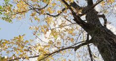 Nature Videos, Nature Gif, Autumn Forest, Autumn Trees, Autumn Leaf Color, Sky Anime, Beautiful Nature Scenes, Video Background, Yellow Leaves