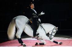 Entertaining the crowd…Lipizzaner Stallion Die Menge unterhalten … Lipizzaner Hengst Lippizaner, Most Beautiful Horses, Animals Beautiful, Pretty Horses, Beautiful Things, Zebras, Lipizzan, Spanish Riding School, Horse Facts