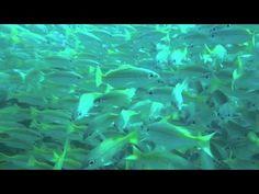Buy Blue Water Waves Texture by on PhotoDune. Blue Water Waves Texture on the Atlantic Ocean