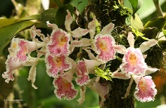 A beautiful orchid. In Costa Rica nature impresses us every day!!!