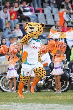 Toyota Cheetahs Mascot Cheetahs, Rugby, Ronald Mcdonald, Toyota, Fictional Characters, Cheetah, Fantasy Characters, Football