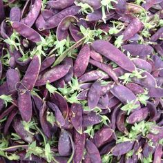 Purple #snowpeas! In #Manhattan? Stop by Union Square Greenmarket to check these out -- open M/W/F/Sat 8AM-6PM #farmersmarketnyc