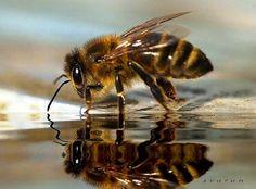 No Bees, No Farms, No Food!