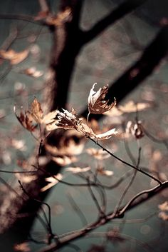 """°fall° """"Take heart and dive into the quiet maturity of autumn. Fall Inspiration, Arte Obscura, Belleza Natural, Autumn Leaves, Soft Autumn, Autumn Forest, Autumn Fall, Late Autumn, Fall Diy"""