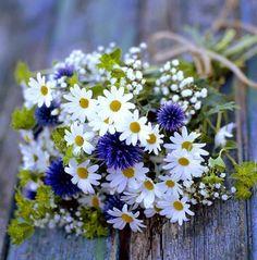 Картинки по запросу букет полевых цветов