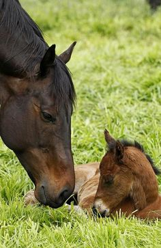 Black Caviar and her new filly