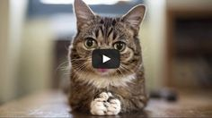 A touching video about internet cat sensation LIL BUB and how much her owner loves her.
