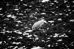 Ασπρόμαυρες, ονειρικές φωτογραφίες του Αρκτικού Βορά