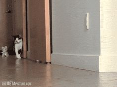 Walking the kitty…GIF click to view