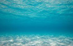 Ocean Wallpapers Full Hd Wallpaper Search · Underwater Wallpaper Tropical Fish