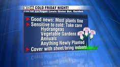 Horticulturist Liz Fogel says that most of your plants tonight will be fine. However, sensitive plants (those not well-adjusted to cold temperatures in the 30s) will need a little TLC. Some of those plants include hydrangeas, vegetable gardens, annuals, and anything newly planted (both in-ground and in-pots). New plants are especially sensitive because they've never been exposed to these temperatures and simply aren't hardy enough yet.