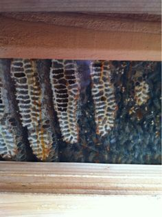 ... brood comb alone when they do this but separate the honey comb. More
