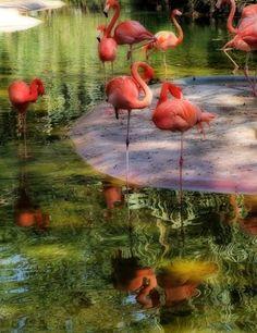 Ue-fuswv: (oo-ee-foos-wuh) Mvskoke word for water bird. Water bird pictured here is the flamingo.