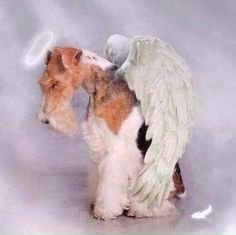 Our angels......