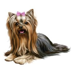 Everything About The Affectionate Yorkie Puppies Temperament Small Puppies, Cute Dogs And Puppies, Pet Dogs, Tumeric For Dogs, Phineas, Yorshire Terrier, Cute Animals Images, Puppy Drawing, Yorky