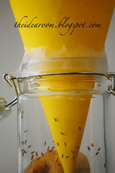 Get rid of those pesky fruit flies