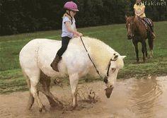 Dang ponies!!