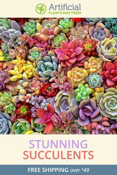 The little details add up to make a big impression in a well-designed home, office, or business space. Artificial succulents from Artificial Plants and Trees are just the touch you need to create high-impact silk plant scenery in the spaces where you spend most of your time.   Each of our artificial succulents is made of high quality silk.   Even your mother will think they're real!
