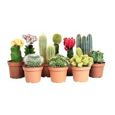 Plants and Plant Pots | Shop at IKEA Ireland
