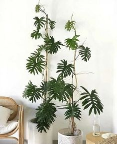 Room With Plants, Types Of Plants, Garden Plants, Indoor Plants, Indoor Gardening, Trees To Plant, Plant Leaves, Plant Needs, Cool Plants