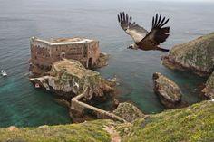 """Berlengas island, Peniche, Portugal.    Reserva da Biosfera das Berlengas          UNESCO reconhece património único do Arquipélago das Berlengas     No ano em que celebra o seu 40º aniversário, o programa da Organização das Nações Unidas para a Educação, Ciência e Cultura (UNESCO) """"O Homem e a Biosfera (MAB)"""" designou o Arquipélago das Berlengas como reserva da Biosfera."""