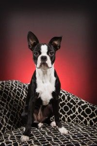 Romie at 7 Months Old from Richmond, Quebec, Canada (Photo)
