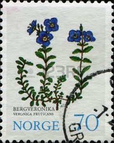 A stamp printed in Norway shows Rock Speedwell - Veronica fruticans, Mountain Flowers series, circa 1979