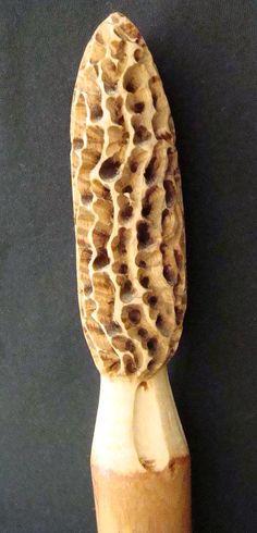 Morel Walking Stick --- so cool :)