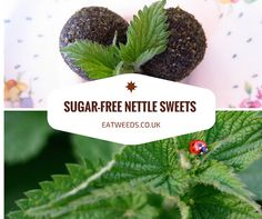 I love Stinging Nettle (Urtica dioica), it has so many potential uses in drinks, savoury and dessert recipes. Recently I gathered some young nettle tips, new growth that had appeared after the council had done some recent strimming. Remembering the recipes I used to create when I was a raw food vegan back on the …