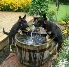 awww these puppies are so cute!! Avid great idea for cute dog fountain