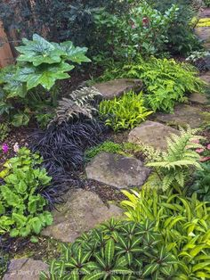 A tapestry of foliage along a shady path -- Primula, painted fern, Carex Banana Boat, Impatiens omeiana, Podophyllum and black mondo grass