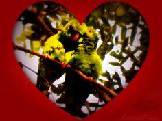Amor é vida; é ter constantemente Alma, sentidos, coração – abertos Ao grande, ao belo, é ser capaz d'extremos, D'altas virtudes, té capaz de crimes! Sentir, sem que se veja, a quem se adora, Compreender, sem lhe ouvir, seus pensamentos, Segui-la, sem poder fitar seus olhos, Amá-la, sem ousar dizer que amamos, E, temendo roçar os seus vestidos, Arder por afogá-la em mil abraços: Isso é amor, e desse amor se morre! Gonçalves Dias