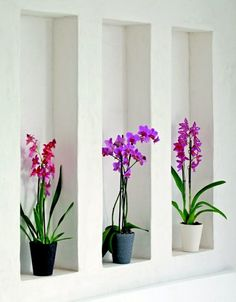 interior design harmony - Feng shui, Living rooms and Plants on Pinterest