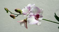 Free Pictures, Free Photos, Free Images, Orchids, Most Beautiful, Flowers, Painting, Color, Rock