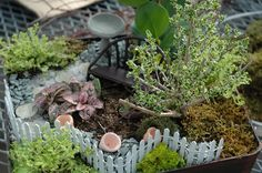 Fairy Garden created during our 2012 workshop. Great example for a small container