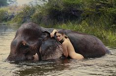 "For the ladies: ""I always love a brisk, naked swim with the wild elephants, don't you?""  For the men: ""Question: How many elephants did you see in this photo?  Hint: If you said, ""Elephant??"" you at least read the right question. 10 pts."