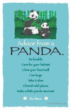 Spirit Totem Animals:  #Advice from a #Panda.