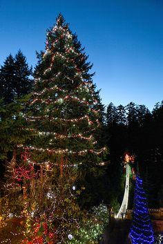 Gallery Capilano Suspension Bridge Park Capilano Suspension Bridge Live Christmas Trees Suspension Bridge