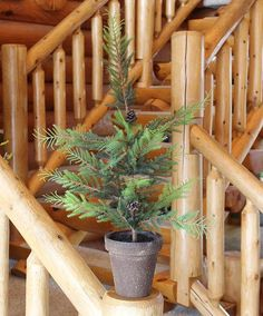 Potted pine tree for the mantel at the cabin