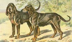 Chien-Gris also known as le Gris de St. Louis, this now extinct dog originated in Medieal times and was a scent hound for the royal families of France. In fact, from 1250-1470 the royal packs of France were composed almost exclusively of these hounds. It is important to note this is not the same breed as the Greyhound. http://en.wikipedia.org/wiki/Chien-gris