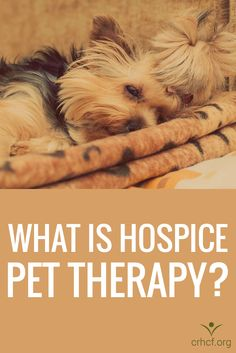 Learn how hospice uses pet therapy and the benefits it yields to patients on the end-of-life journey