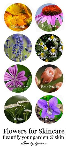 26 Flowers for Skincare - beautify your garden and skin with these healing herbs and flowers. Make teas, tinctures, and infusions to use directly on the skin or to mix into beauty preparations.