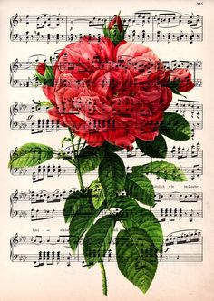 Red Rose on vintage1910 music