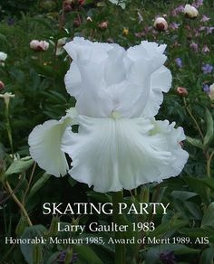 """""""Skating Party"""", a Historic Iris. So designated because it was bred 30 or more years ago. Looks like a """"must have"""" for our gardens!"""