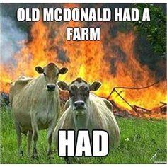 Hahahahahahahahaha evil cows. Havoc, such havoc!
